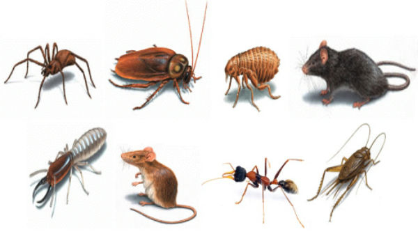 Types of pest
